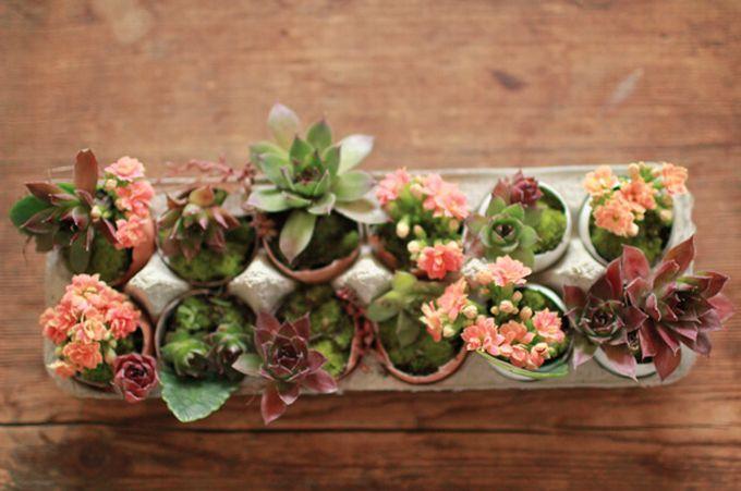 Как правильно расставить комнатные растения